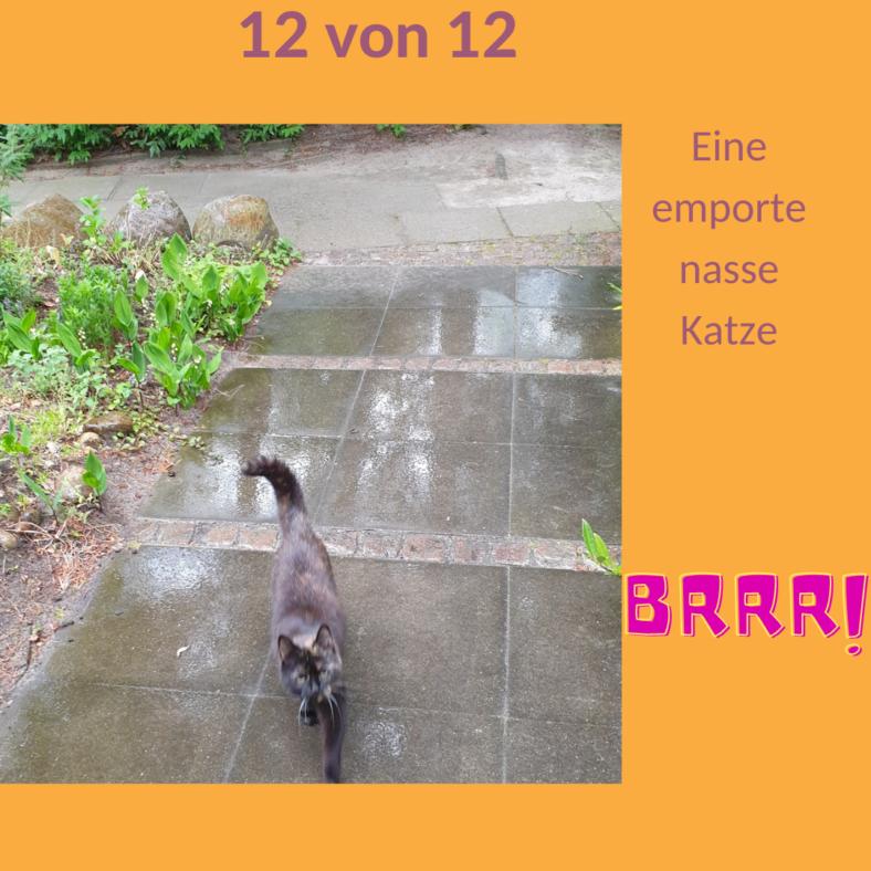 Eine empörte Katze rennt durch den Regen auf die Haustür zu