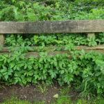 Eine Bank am Weg, komplett umwachsen von Pflanzen, die auch zwischen den Bohlen der Sitzfläche durchkommen. Passend zum Monatsrückblick mit der überbordenden Natur.