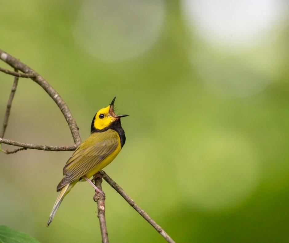 Singen ist nicht nur für Vögel schön