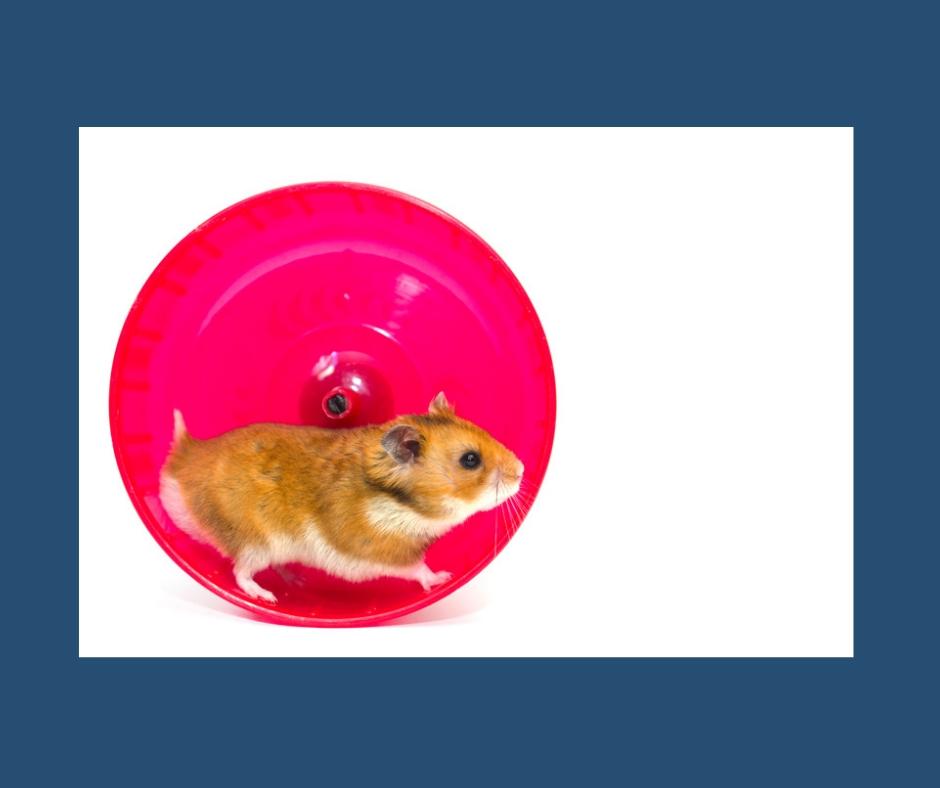 Ein Hamster läuft in seinem Hamsterrad