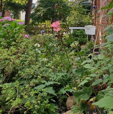 Ein Naturgarten in rosa, lila und weiß